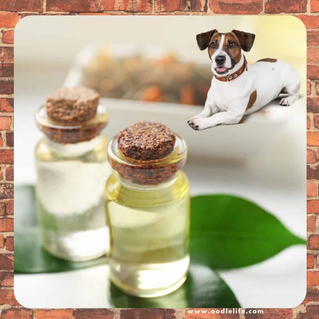 is tea tree oil toxic
