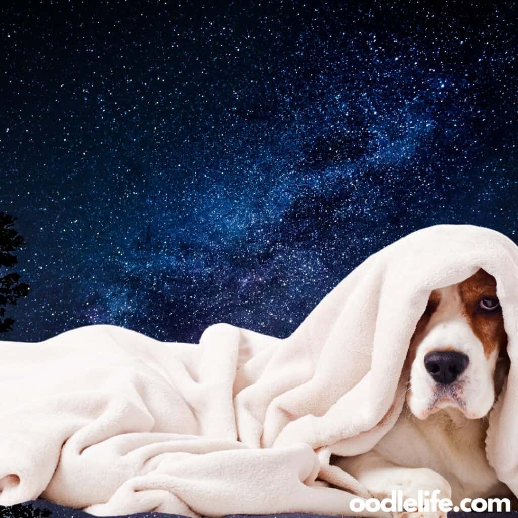 large dog blanket sleeping
