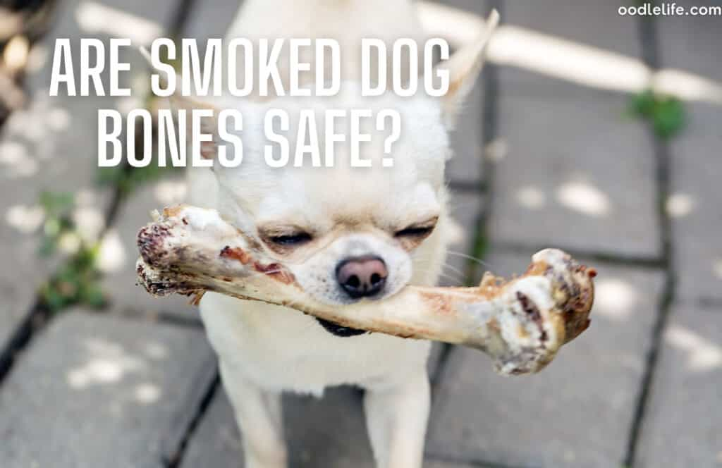 are smoked dog bones safe for puppies