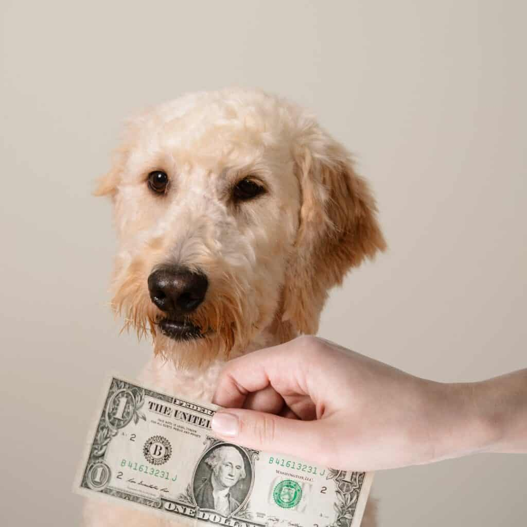 goldendoodle cost so much