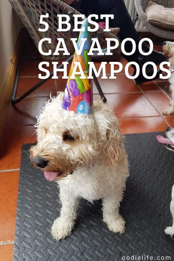 5 best cavapoo shampoos