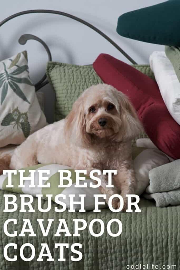 best brush for cavapoo slicker brush for wavy coat