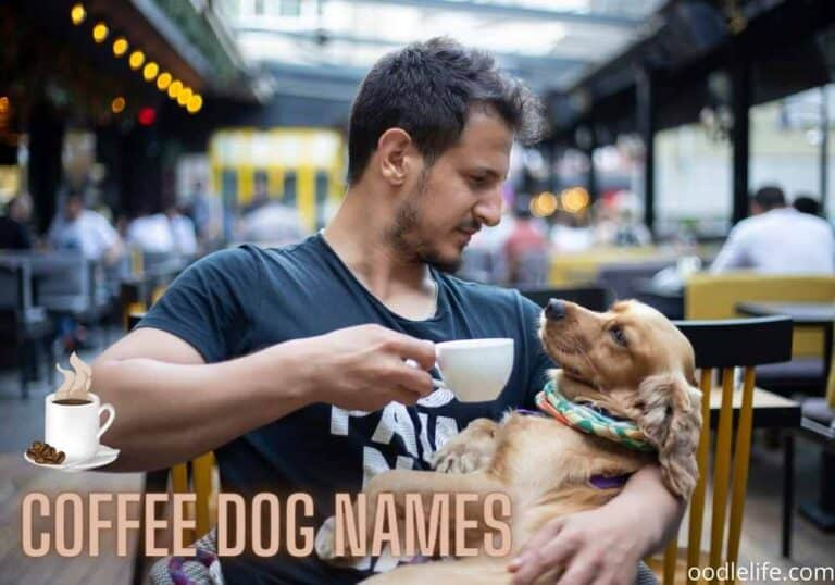 73 Best Coffee Names for Dogs