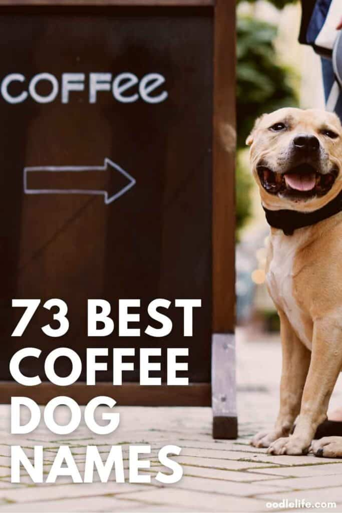 best coffee dog names