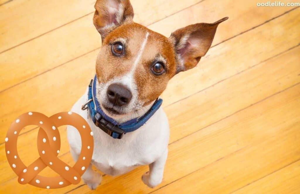 dog eat pretzels begging