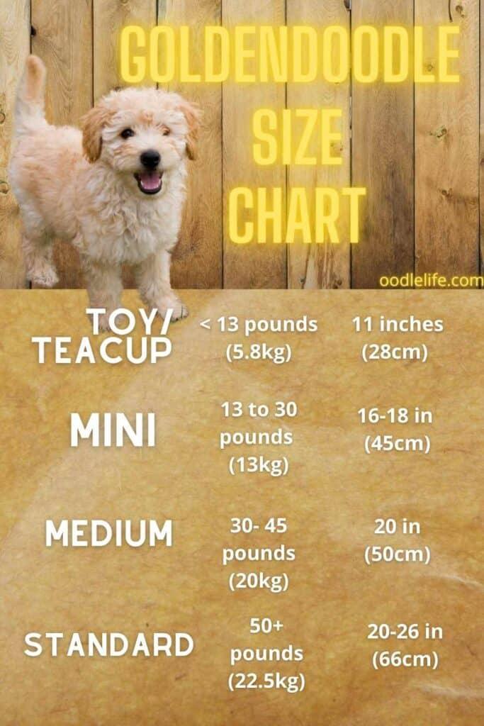 how big do goldendoodles get goldendoodle size chart