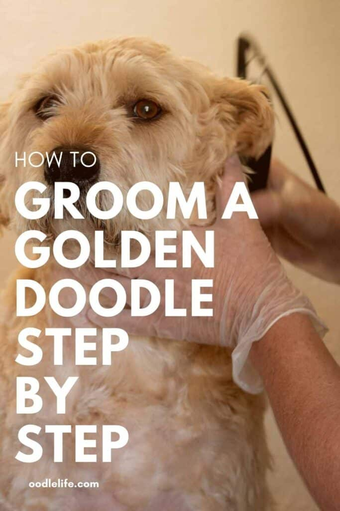 Pinterest image on how to groom a goldendoodle