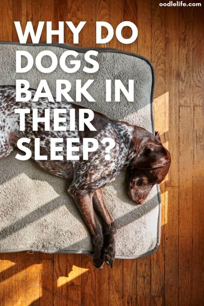 why do dogs bark in their sleep