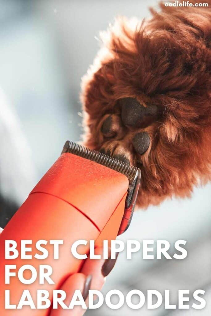 best clippers for labradoodles