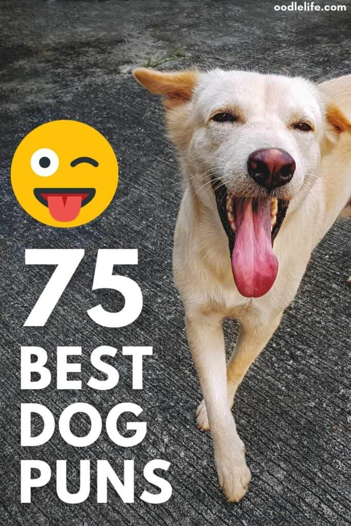 best dog puns