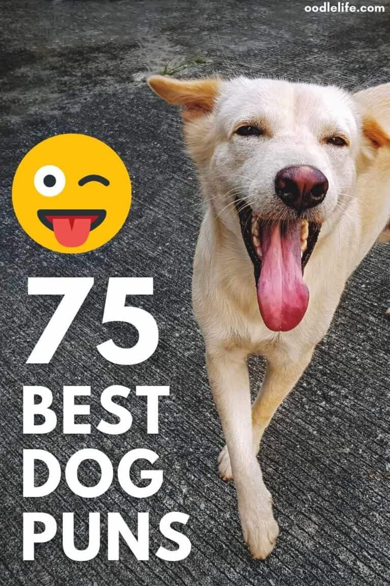 Dog Puns! The 75 Best Dog Puns