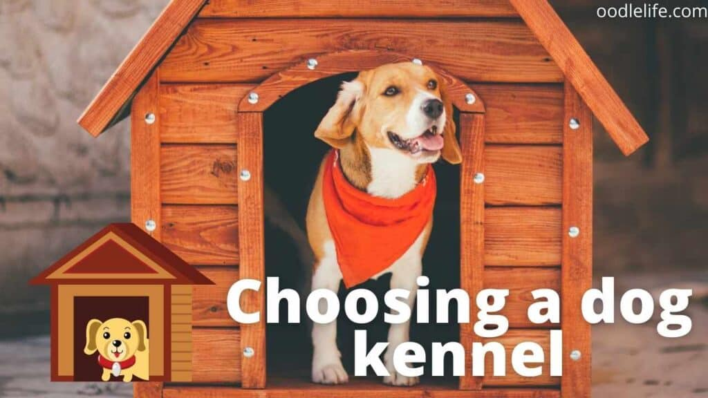 a beagle in a kennel