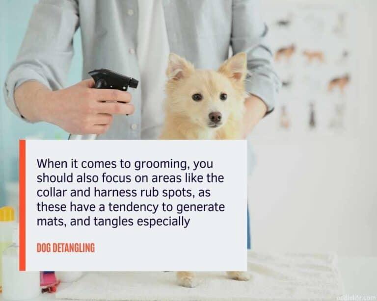 DIY Dog Detangler Homemade Spray