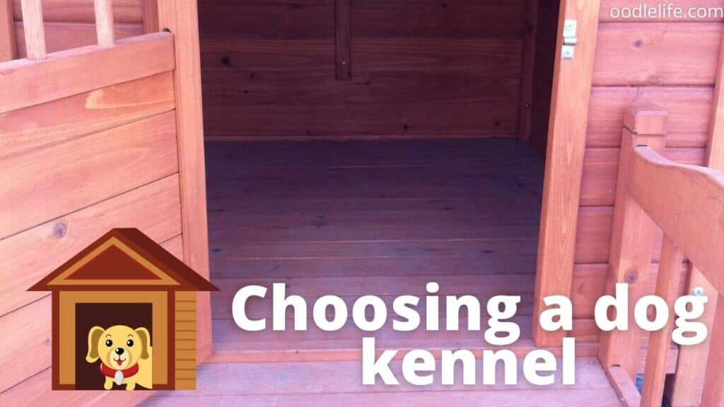 spacious dog kennel interior