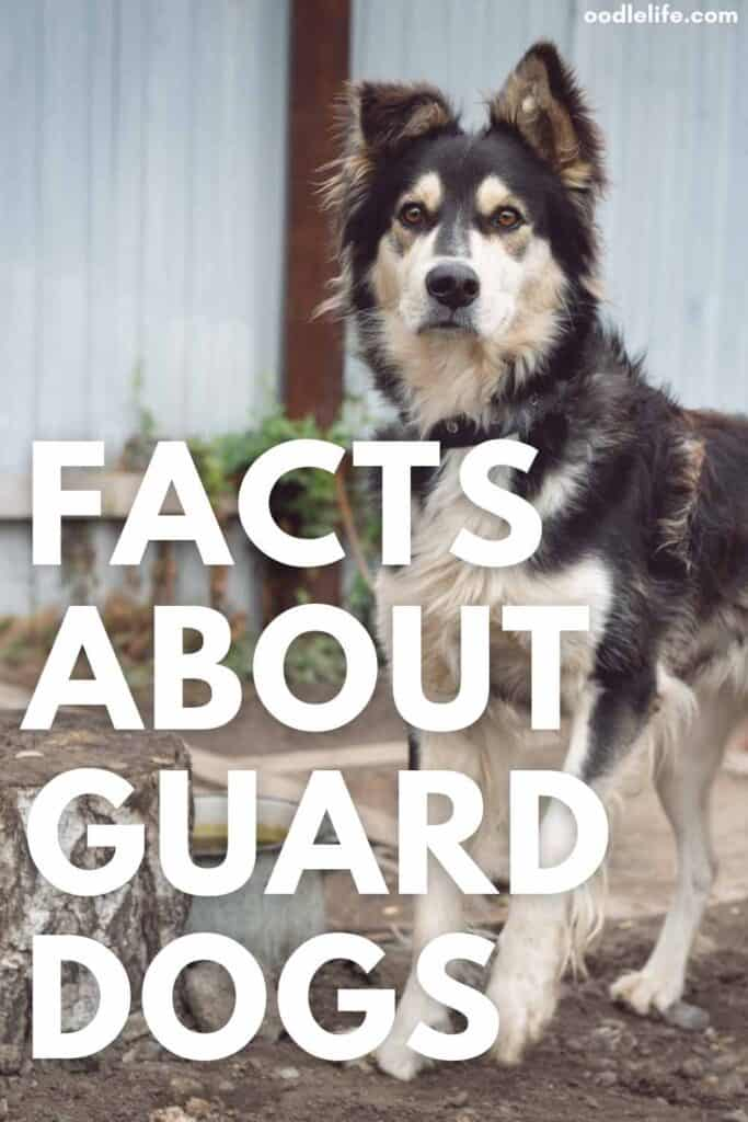 facts about guard dogs