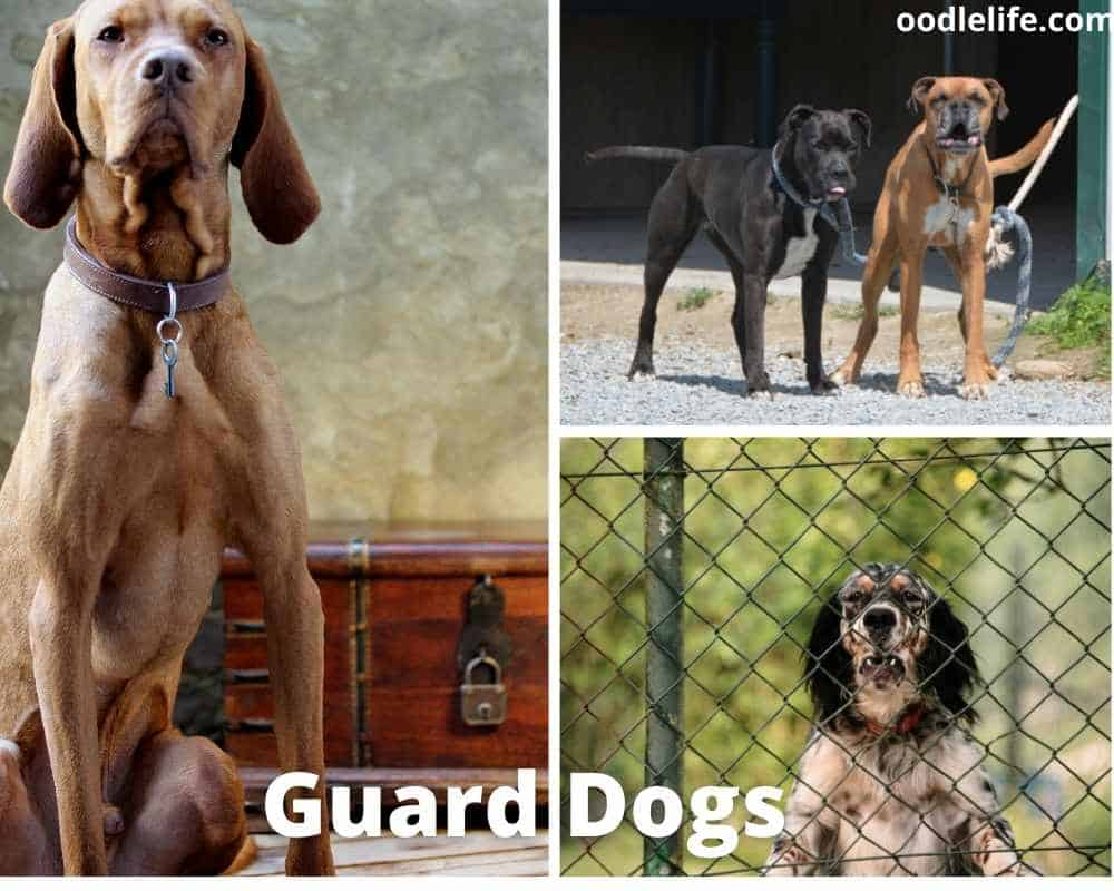 photos of different types of guard dogs