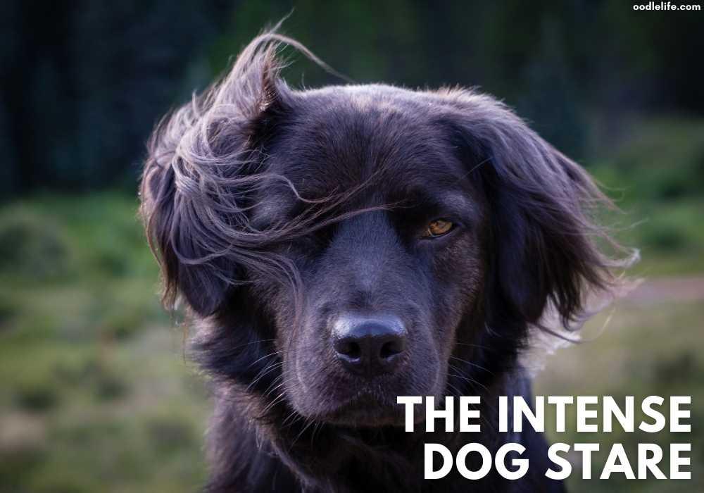 an intense dog stare