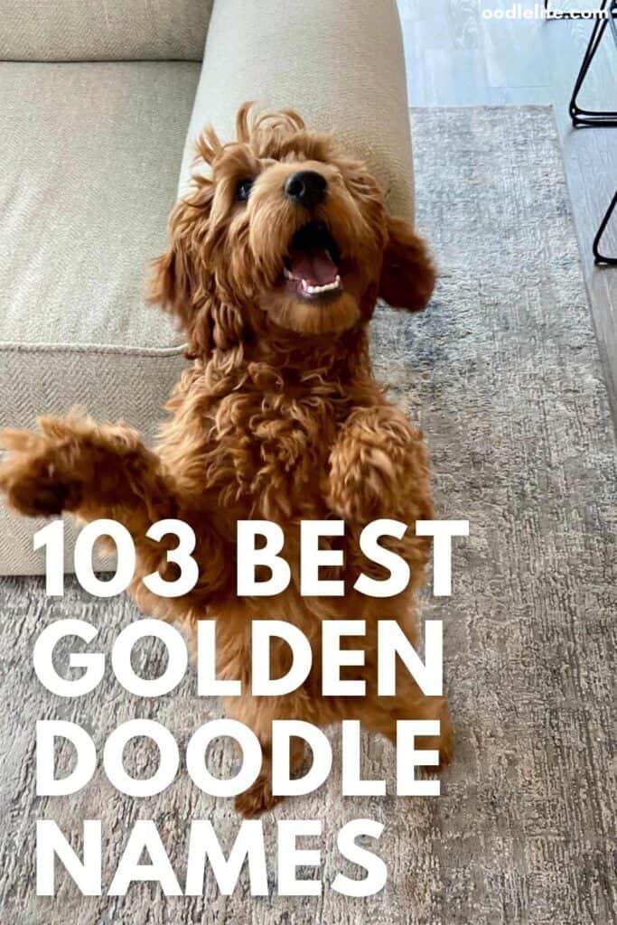 best goldendoodle names