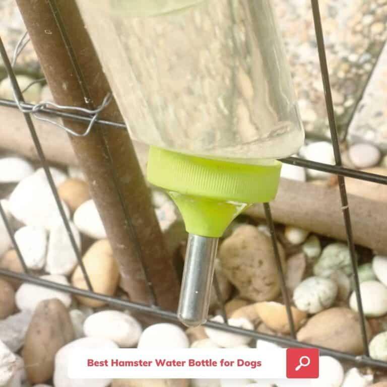 The 5 Best Hamster Water Bottles for Dogs