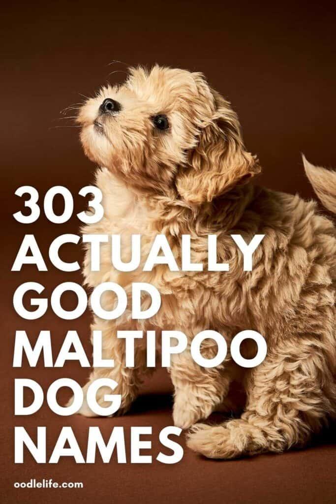 best maltipoo dog names