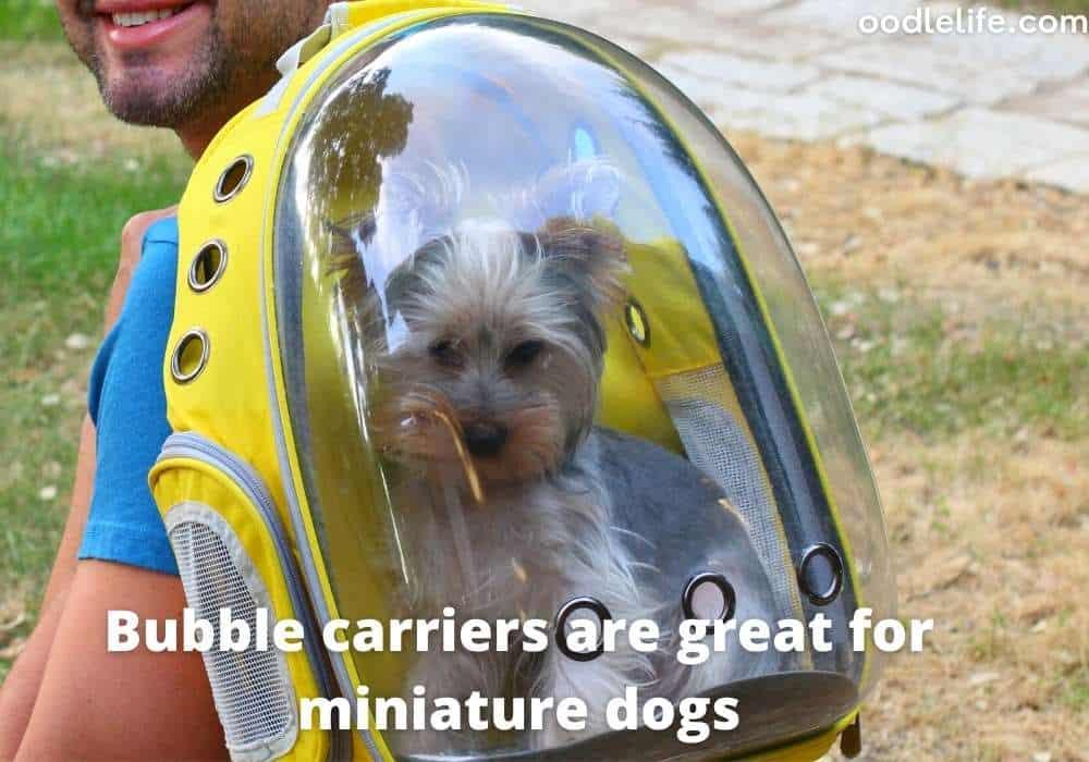 a bubble dog carrier