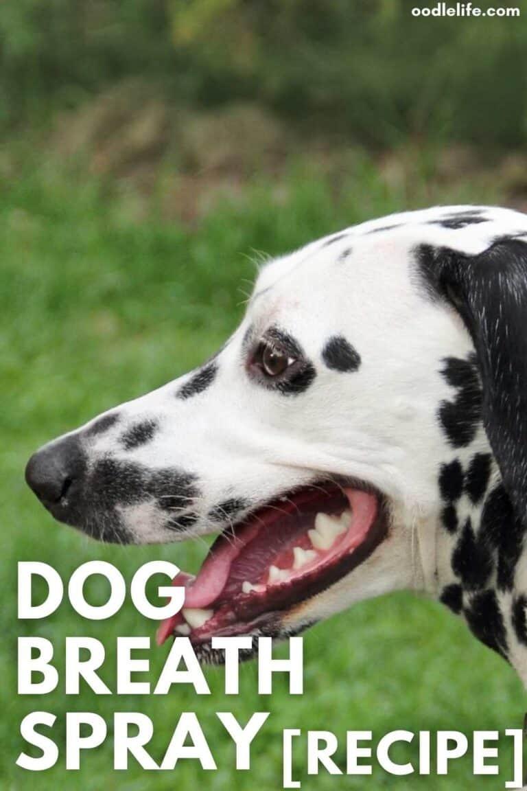 Homemade Dog Breath Spray (Best Recipe)