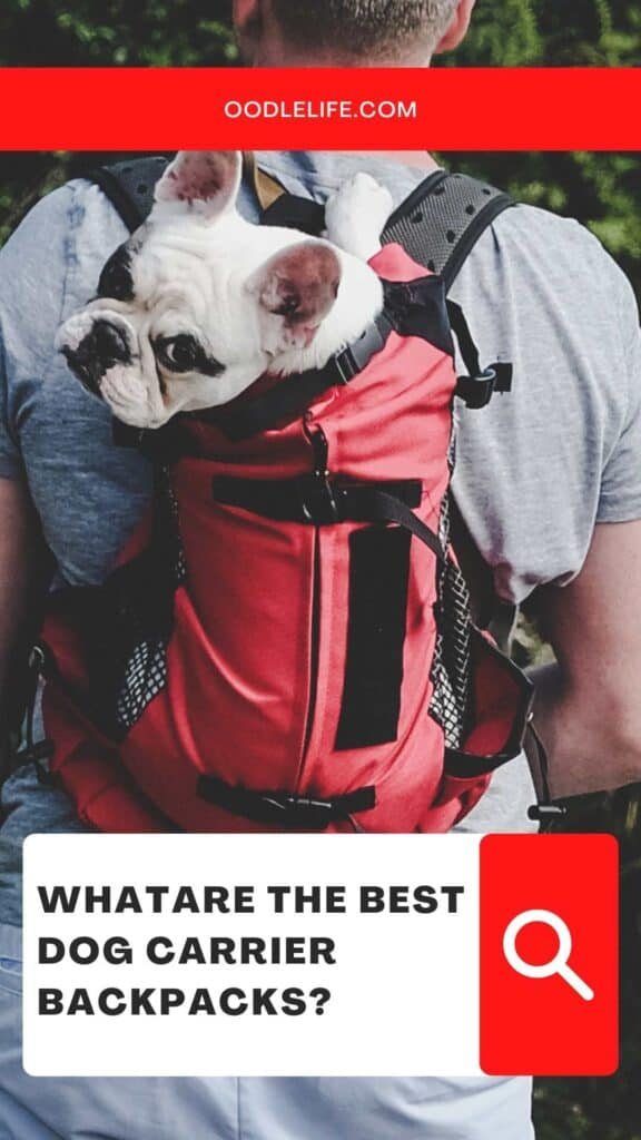 the best dog carrier backpack choice