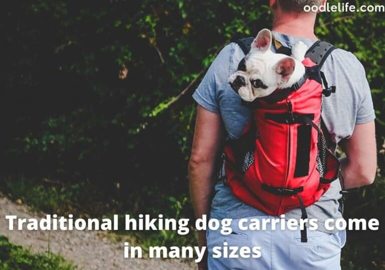 5 Best Dog Carrier Backpack Picks