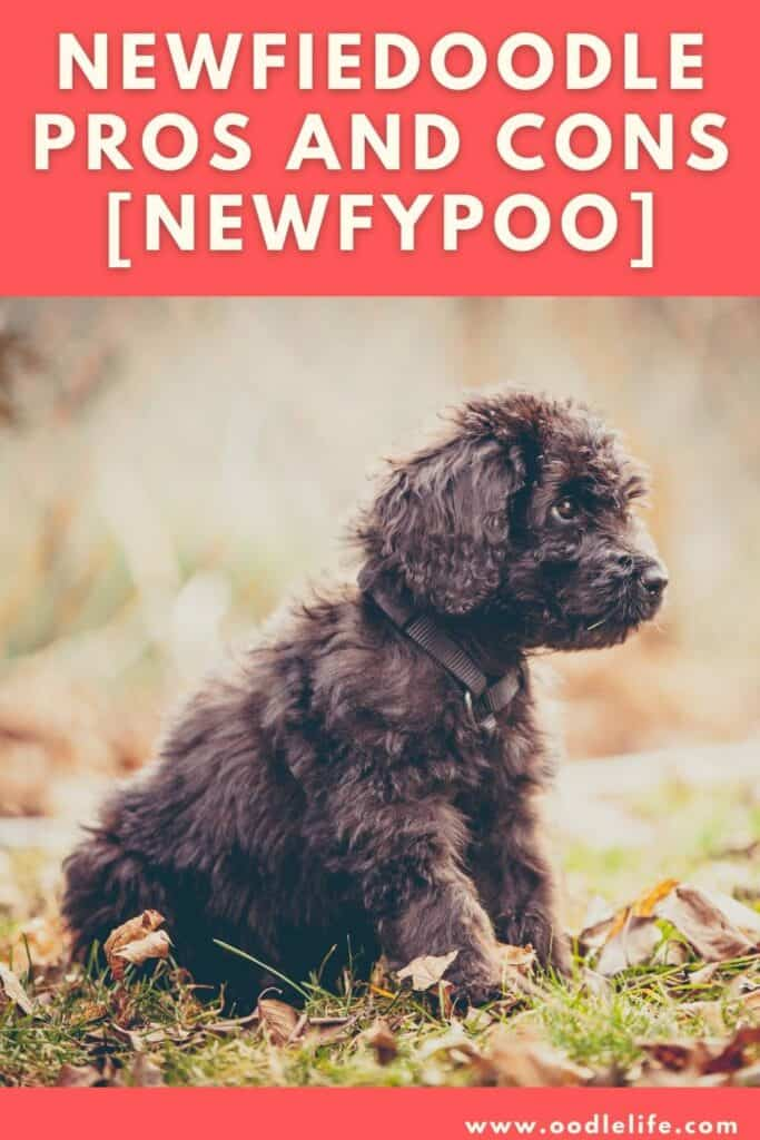 newfiedoodle pros and cons