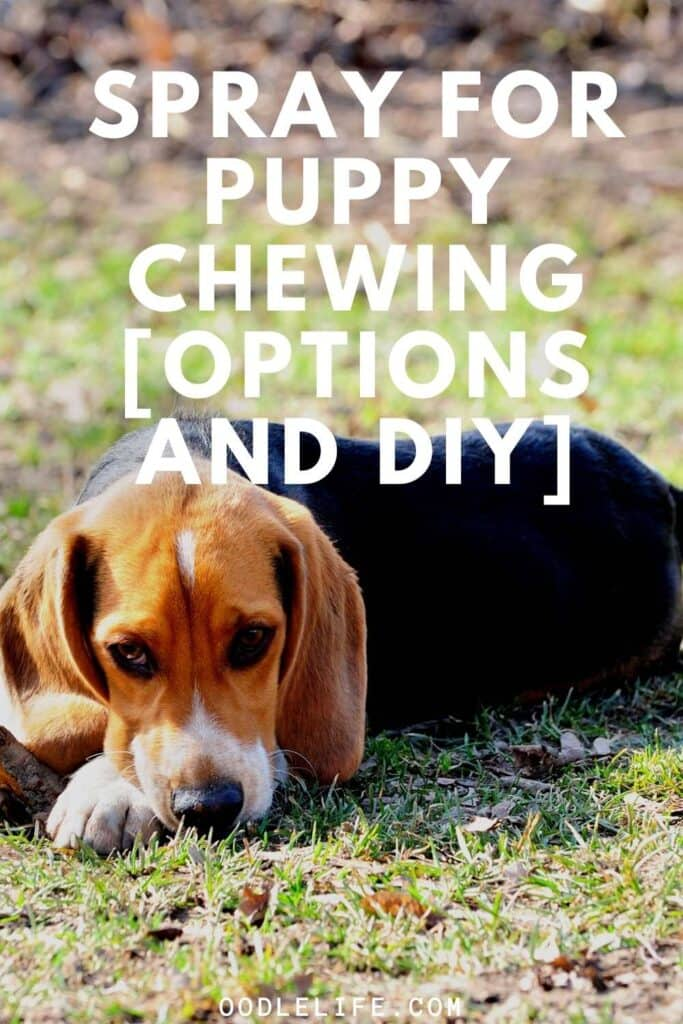 spray for puppy chewing