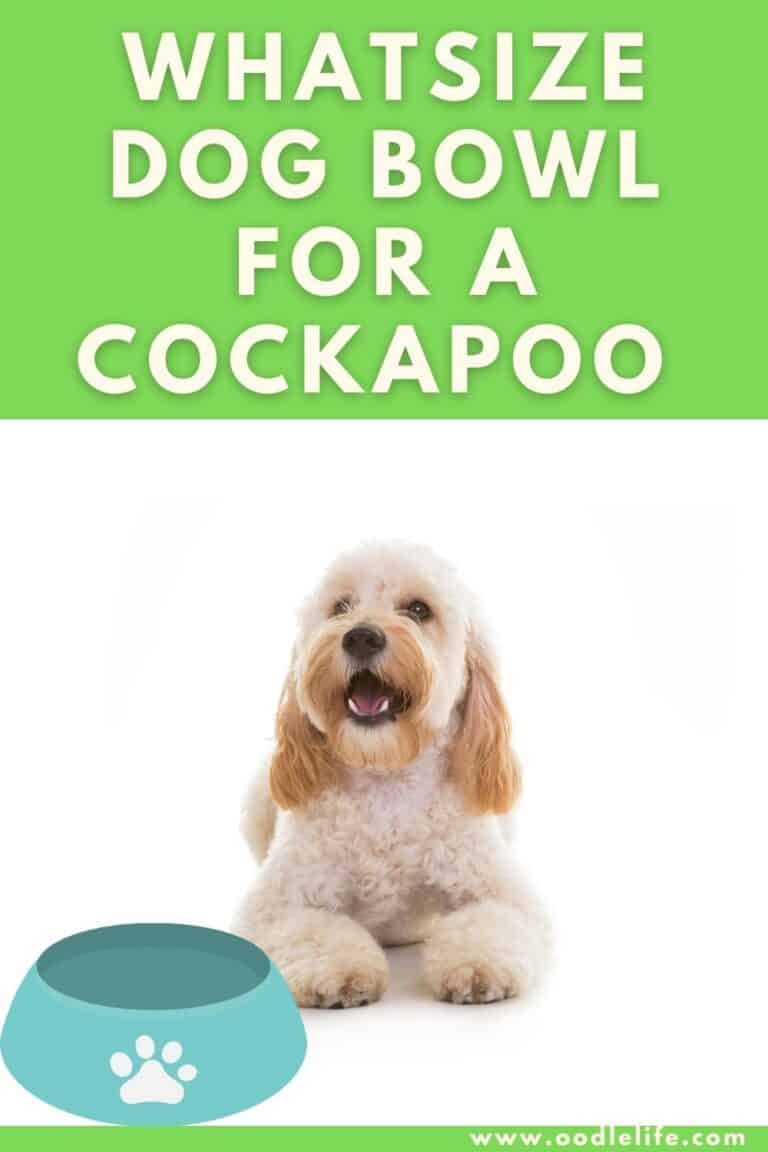 What Size Dog Bowl for a Cockapoo?