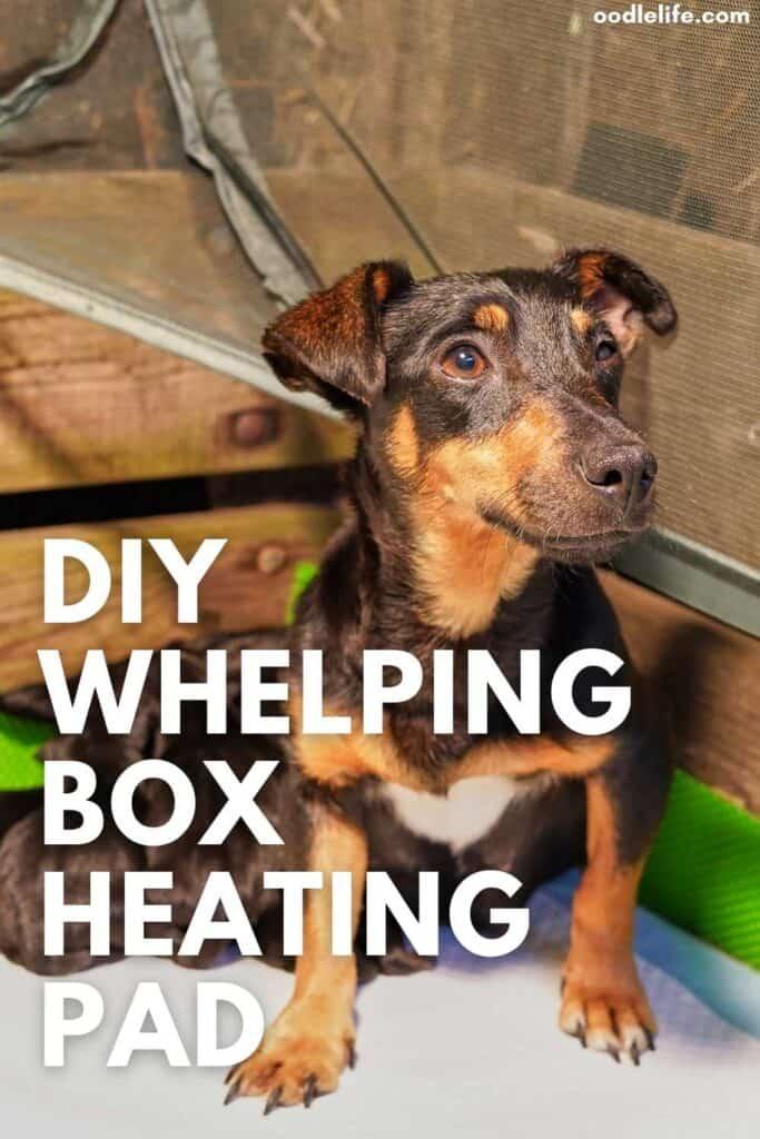 whelping box heating pad