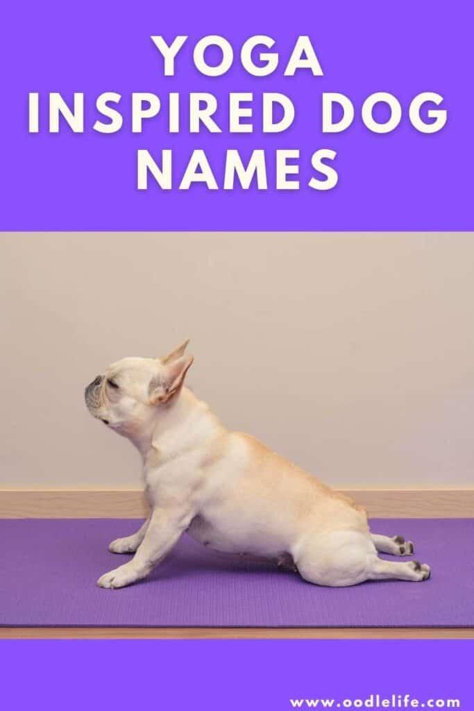 best yoga dog names a dog does a cobra stretch