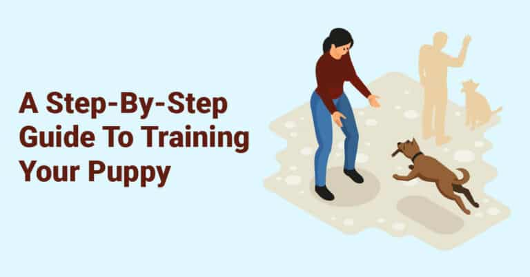 A Step-By-Step Guide To Training Your Puppy