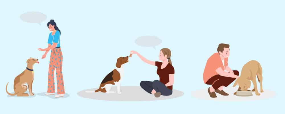 Teaching Your Dog Obedience and Basic Commands
