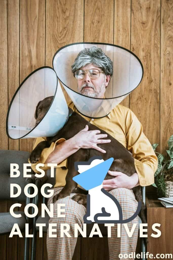 best dog cone alternatives