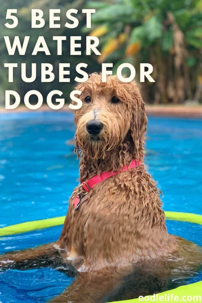 best water tubes for dogs