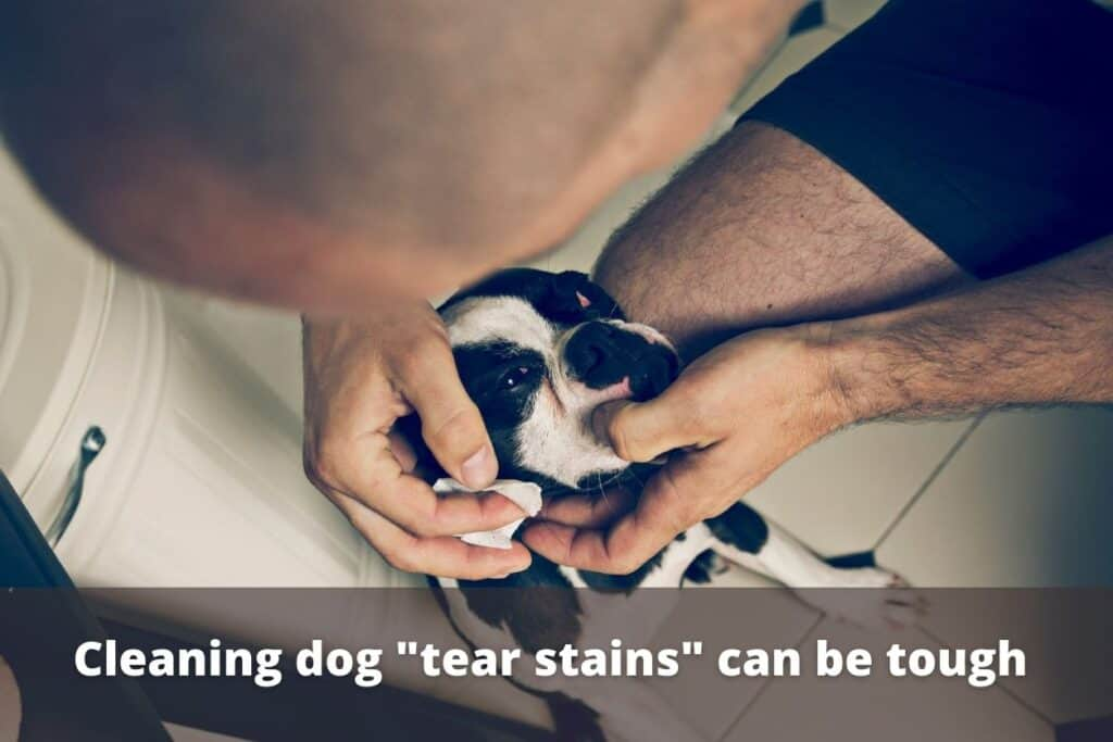 cleaning the stain from a dogs eyes
