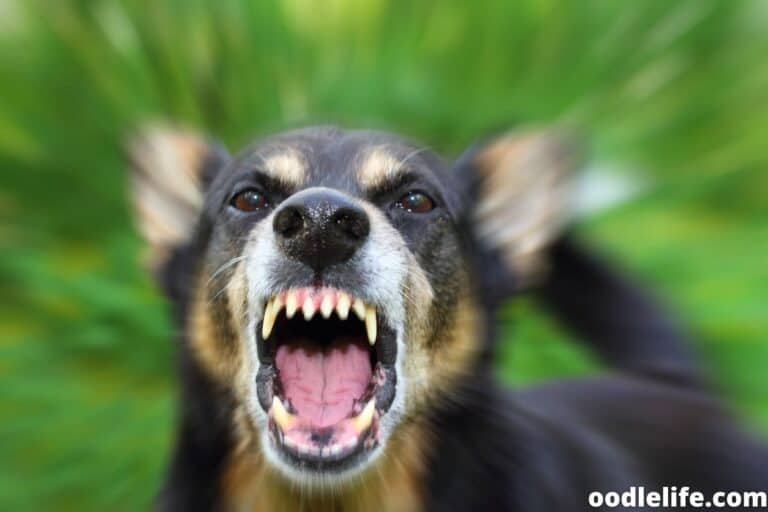 Do Dogs Eat Other Dogs? [Is Dog Cannibalism Real?]