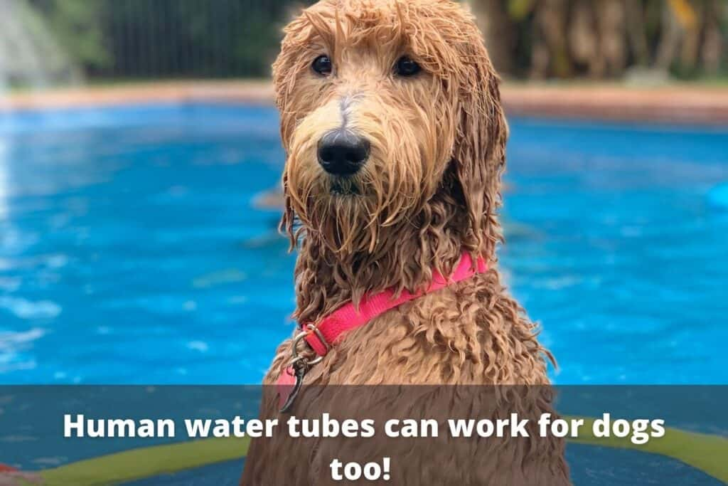 dog in pool with water tube