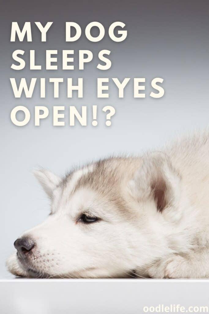 my dog sleeps with eyes open