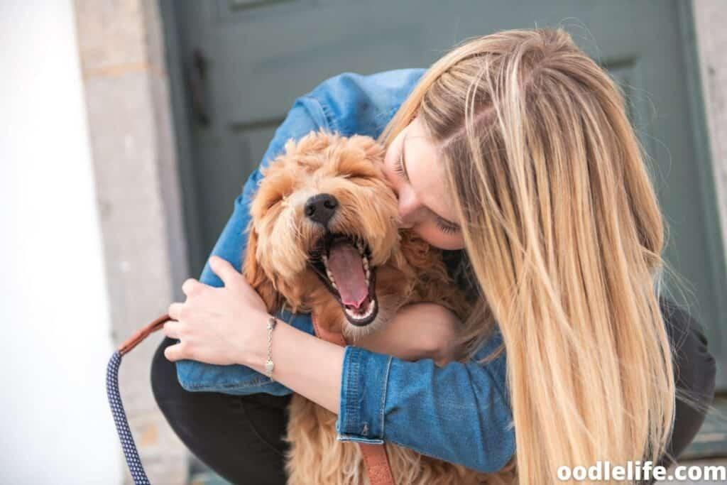 happy labradoodle puppy