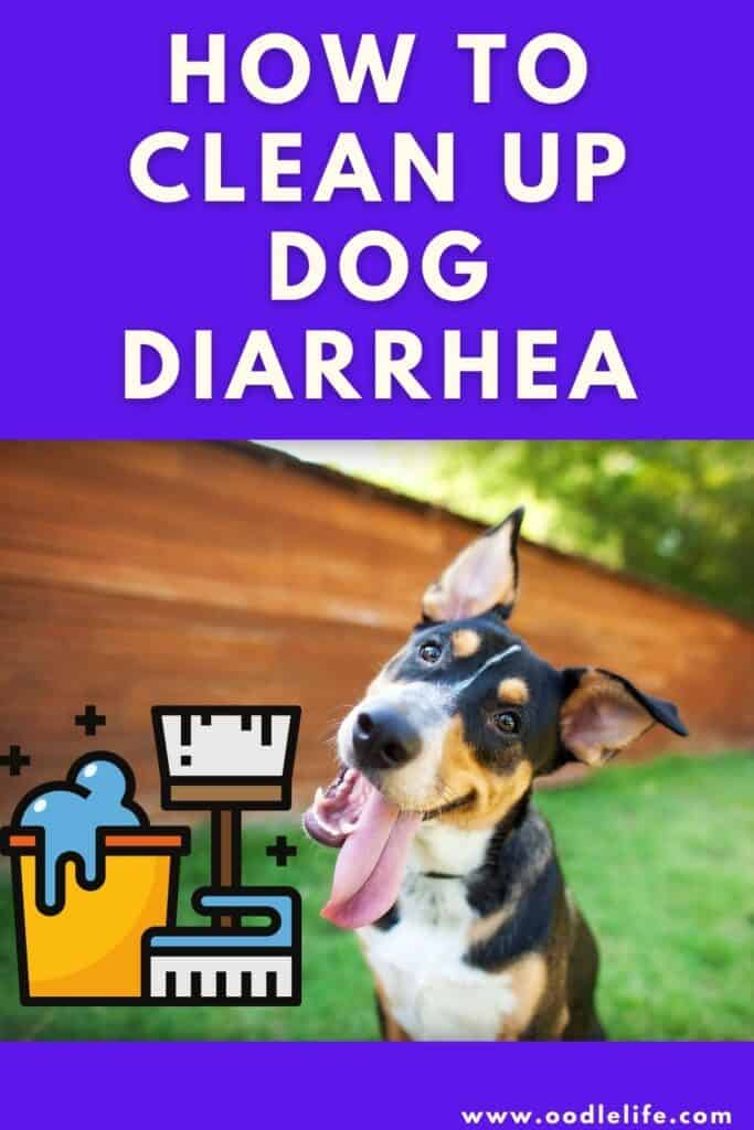 how to clean up dog diarrhea