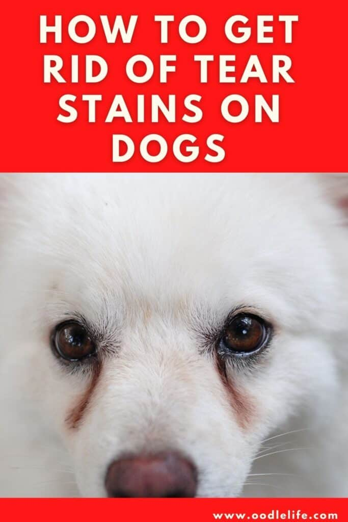how to get rid of year stains on dogs