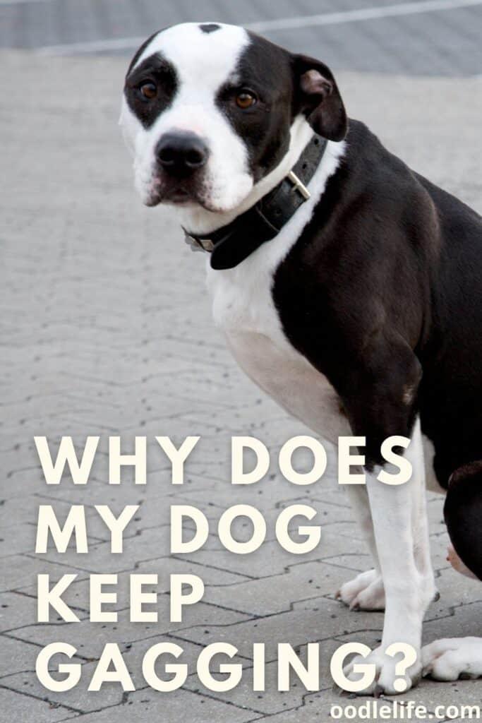 why does my dog keep gagging