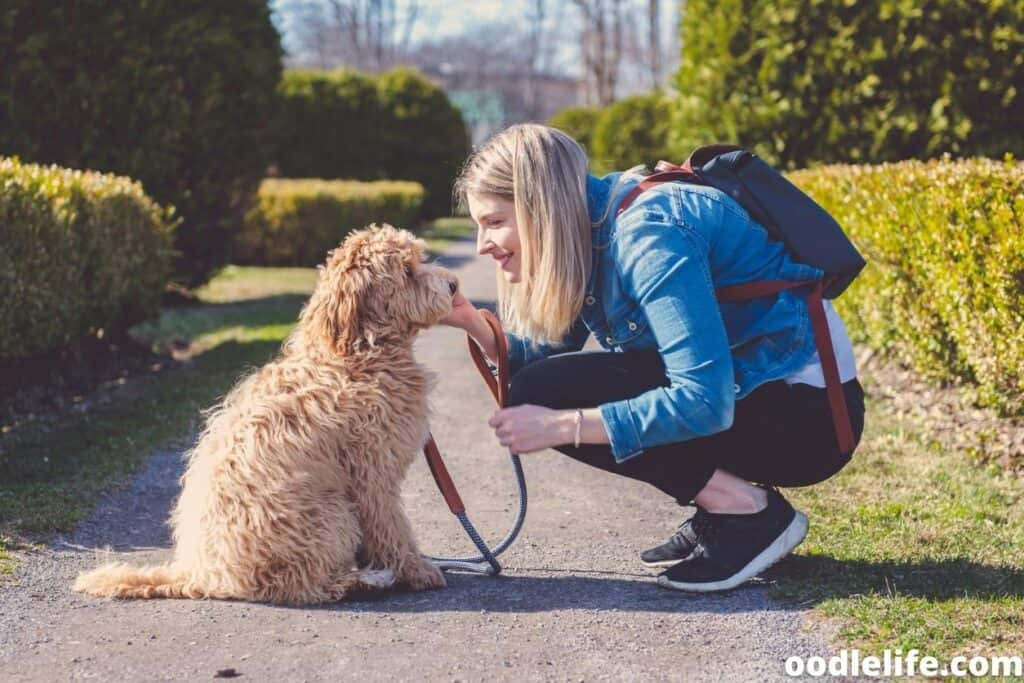 woman and Labradoodle