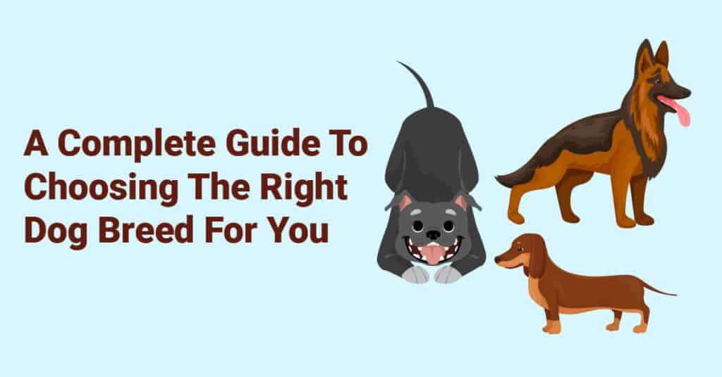 A Complete Guide To Choosing The Right Dog Breed For You