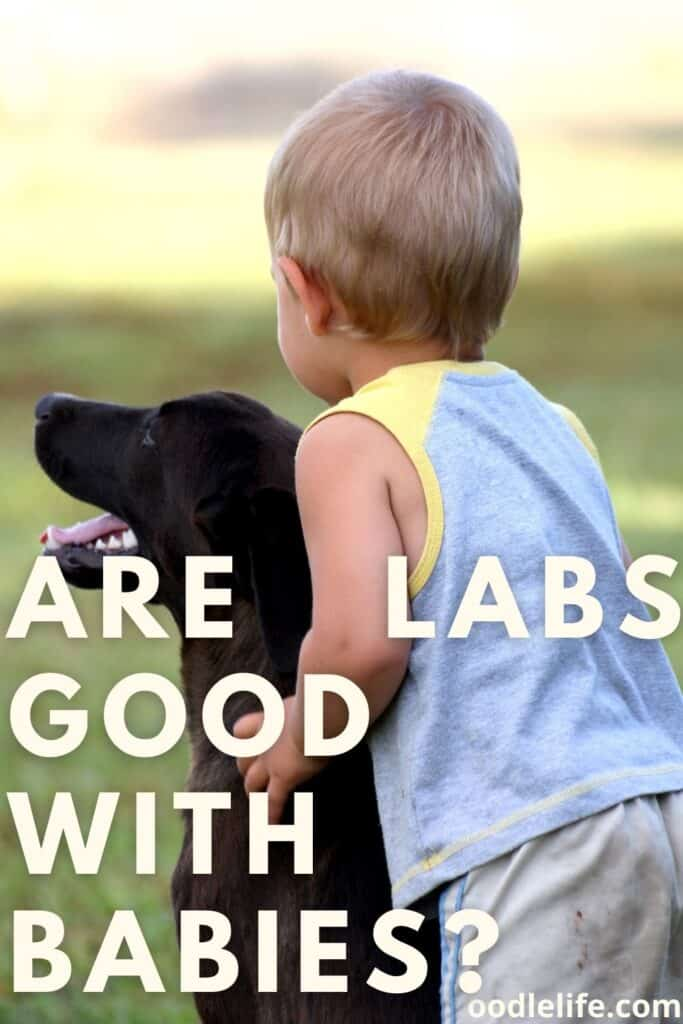 are labs good with babies