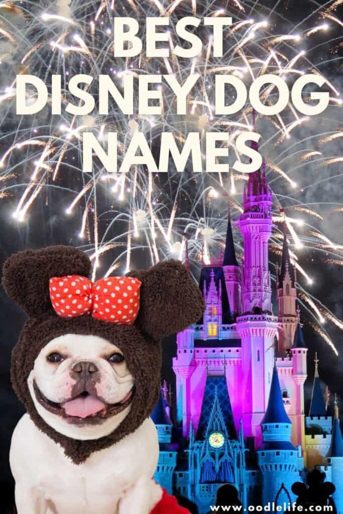 the best disney dog names