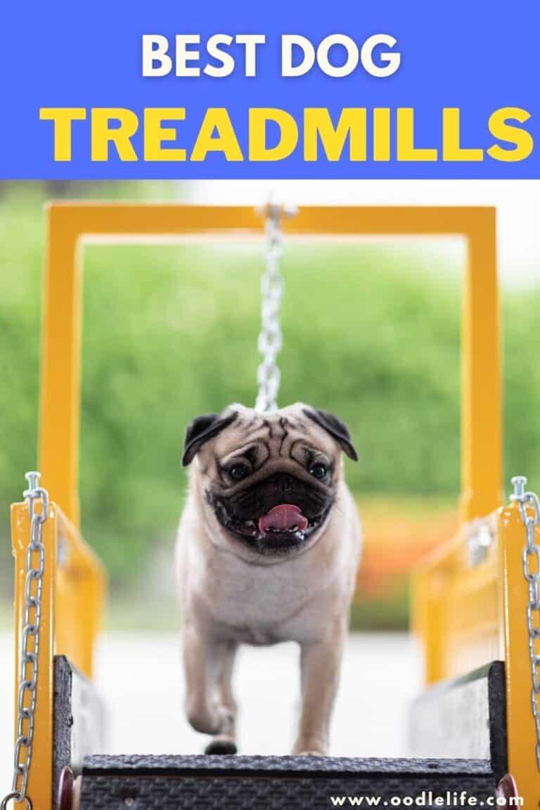 Best Dog Treadmills [Safe and Not Motorised]